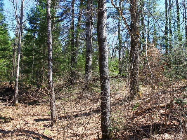 mls# 176654 - little pine rd 7580 - hurley, wi - pic 37